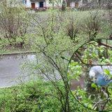 Волнистый попугай на ул. Бессарабенко