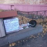Кошачья коробка.jpg