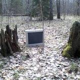 Цивилизиация в лесу
